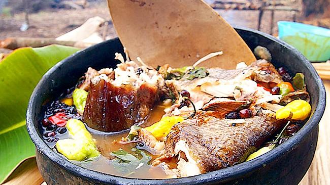 ajicero-del-amazonas